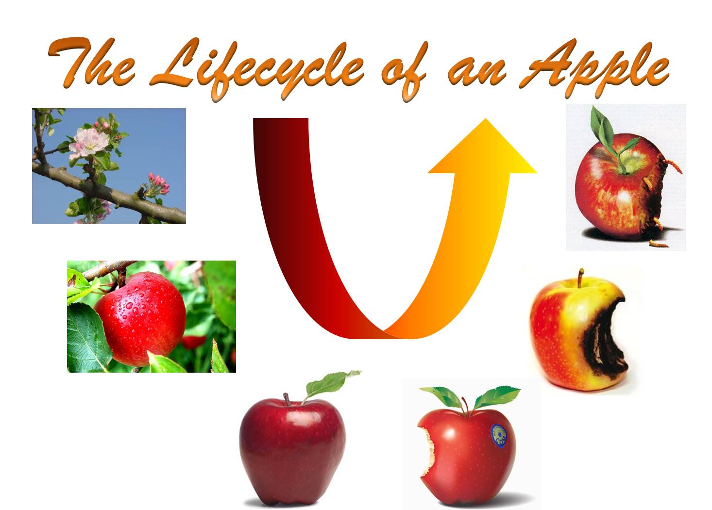 how the lifecycle of an apple informs semantic interoperability